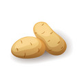fresh potatoes in peel icon isolated farm organic vector image