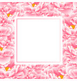 pink peony banner card vector image vector image