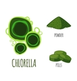 Superfood chlorella set in flat style vector image