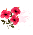 Three pink flowers background vector image