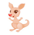 little kangaroo vector image