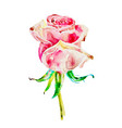 original watercolor painting of rose isolated on a vector image vector image