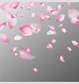 pink sakura petals realistic pink falling cherry vector image
