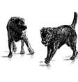 retriever puppies vector image