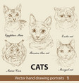 set hand drawing cats 1 vector image vector image