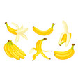yellow bananas isolated on a white background vector image