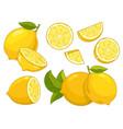citrus lemon slice isolated on white background vector image