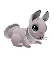 cute rabbit isolated on white background of vector image vector image
