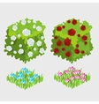 two bushes white and red roses flower beds vector image