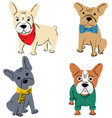 cartoon character french bulldog vector image
