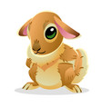 cute bunny isolated on white background of vector image vector image