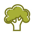 green organic fresh broccoli isolated flat cartoon vector image