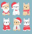 cute french bulldog puppy in christmas costume vector image