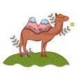 desert camel cartoon vector image