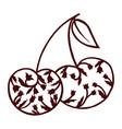 zen doodle cherry vector image vector image