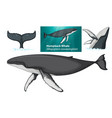 a humpback whale character vector image vector image