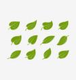 green leaf icon set natural organic logo vector image