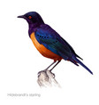 hildebrandts starling hand drawn vector image vector image