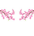 sakura branches with purple flowers cherry vector image vector image