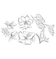 line drawn botanical sketch with flowers vector image