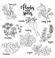 Spices and herbs set Contour on white vector image