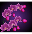 Branches of an Orchid vector image