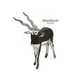antelope series blackbuck vector image vector image