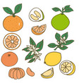 colored drawing organic food collection vector image vector image