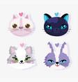 cute faces cats love domestic cartoon animal vector image vector image