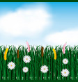 garden flowers and grass field vector image vector image