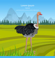 ostrich bird in the wild nature green vector image