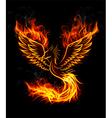 Fire burning Phoenix Bird with black background vector image