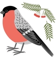 a bullfinch vector image