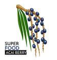 acai berry icon vector image vector image