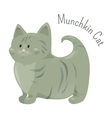 Munchkin cat isolated Very short legs type vector image vector image