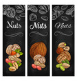 nut and legume bean sketch chalkboard banners vector image
