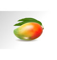3d realistic orange red green mango on transparent vector image vector image