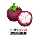 mangosteen icon vector image vector image