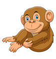 monkey sitting cartoon vector image