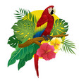 red macaw sit on branch of tree vector image