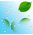 water drops on the leaves vector image