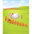 a sheep in a farm vector image