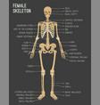 female skeleton image vector image vector image