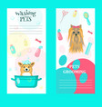 set pet grooming salon cards vector image