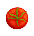 tomato fresh healthy red tomato made in flat vector image