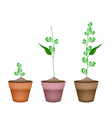 Flower and Leaves of Neem in Ceramic Flower Pots vector image vector image
