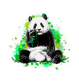panda sitting and eating bamboo from a splash
