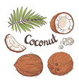 Coconut set - the whole nut leaves a coco segment vector image vector image