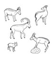 sketch farm animals collection vector image vector image