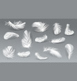 3d realistic set of white feathers vector image